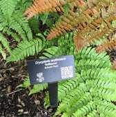 Green and Brown shrubbery with Dryopteris tag
