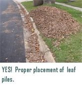 leaves YES