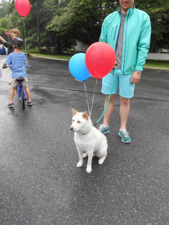 White dog with balloons